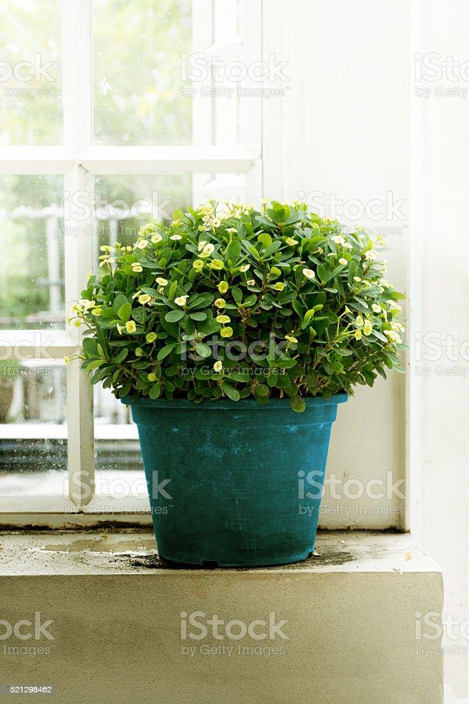 plants in pots side window stock photo