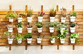 Plants in pots wall mount