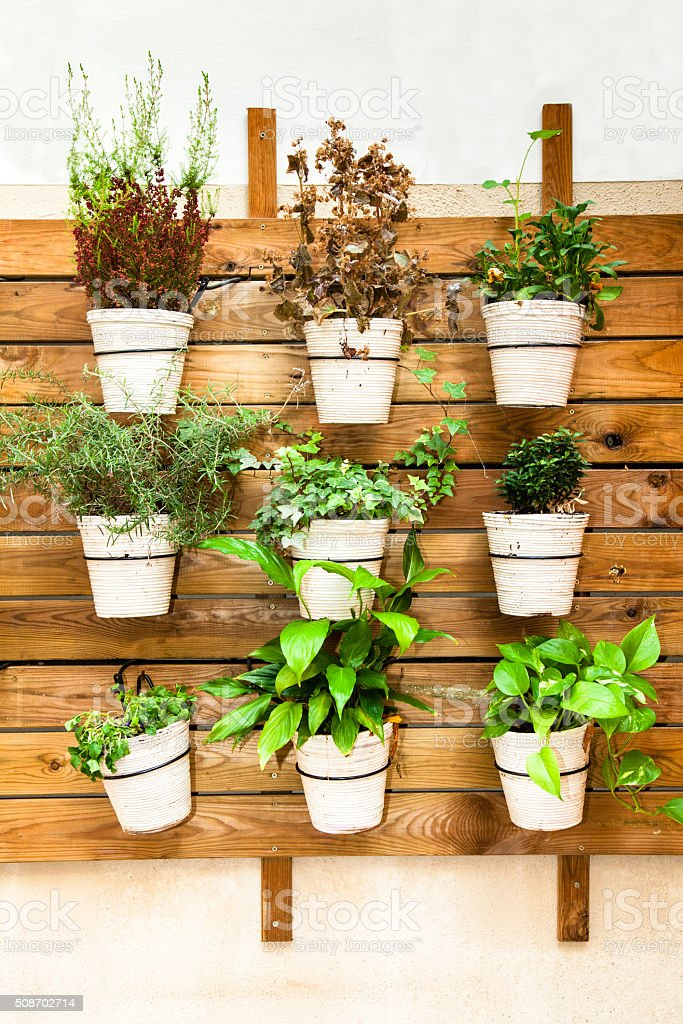 Plants in pots wall mount stock photo