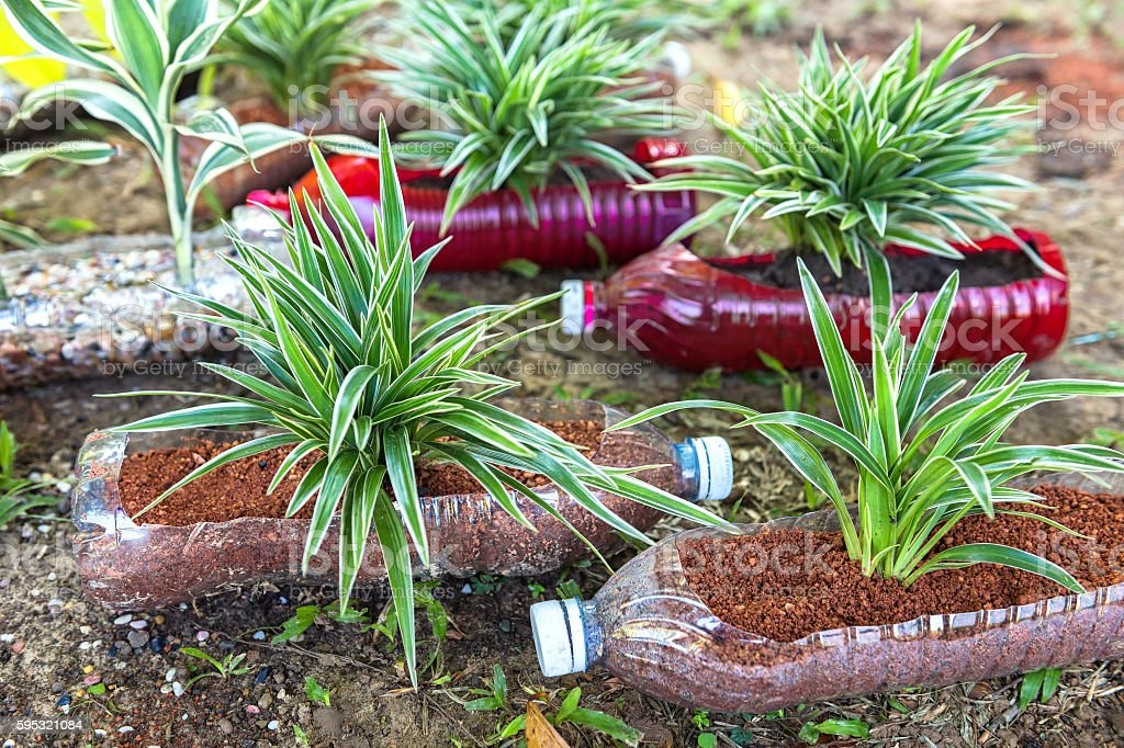 Plants in Recycled Water Bottles, Selective Focusing stock photo