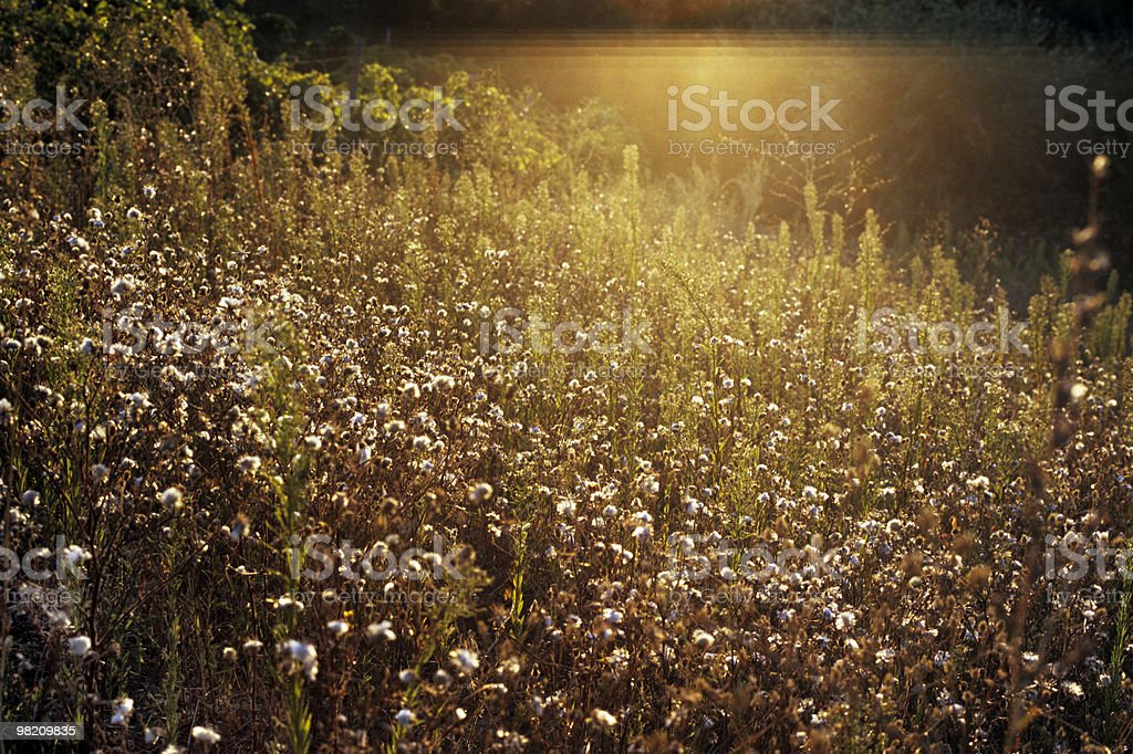 plants in sunset stock photo