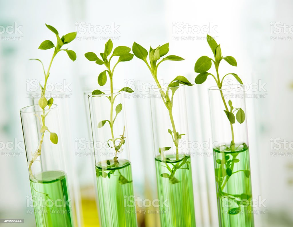 Plants in test tubes getting analyzed in a laboratory stock photo