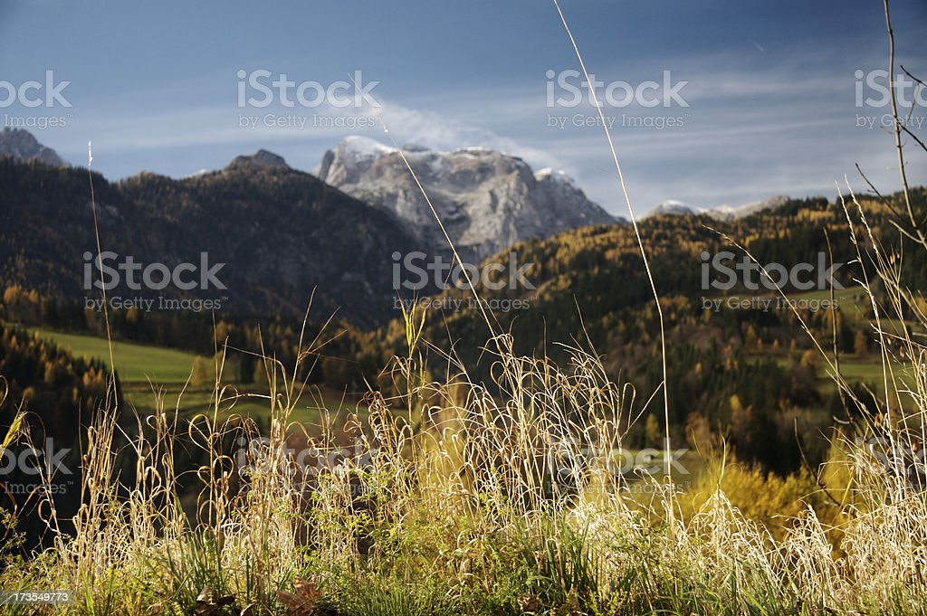 Plants in the Austrian Alps stock photo