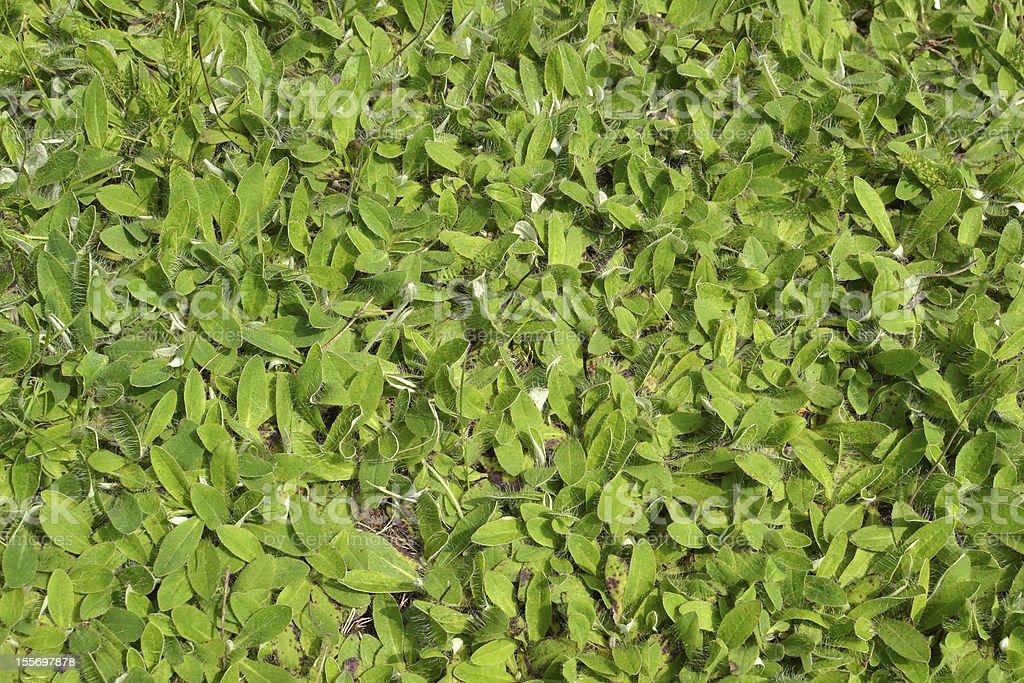 植物のフィールドです。 ロイヤリティフリーストックフォト