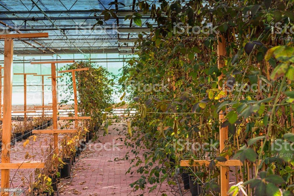pflanzen im gewächshaus stock photo 664395718 | istock, Terrassen ideen