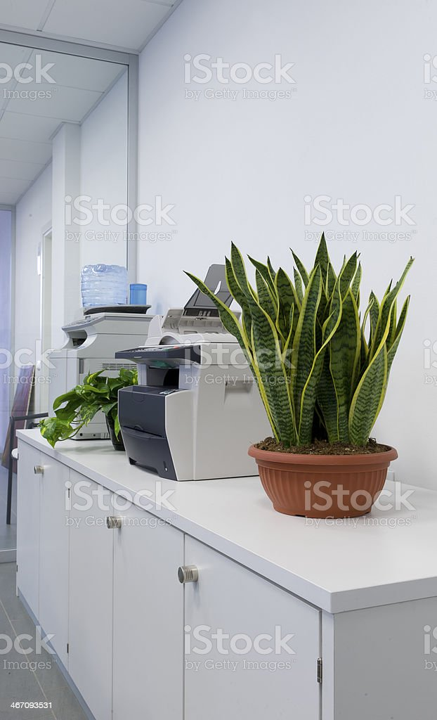 Plants in the office stock photo