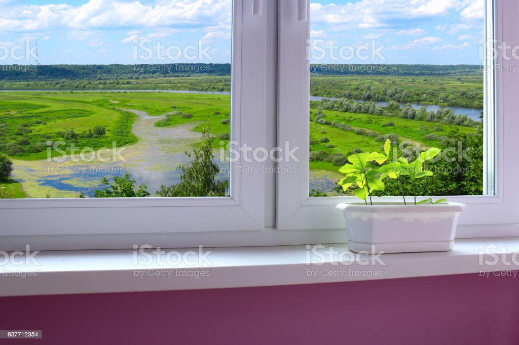 plants in the pot on the window-sill and view to the landscape stock photo