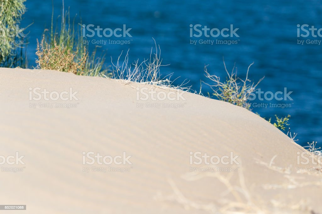 plants in the sand in the desert stock photo