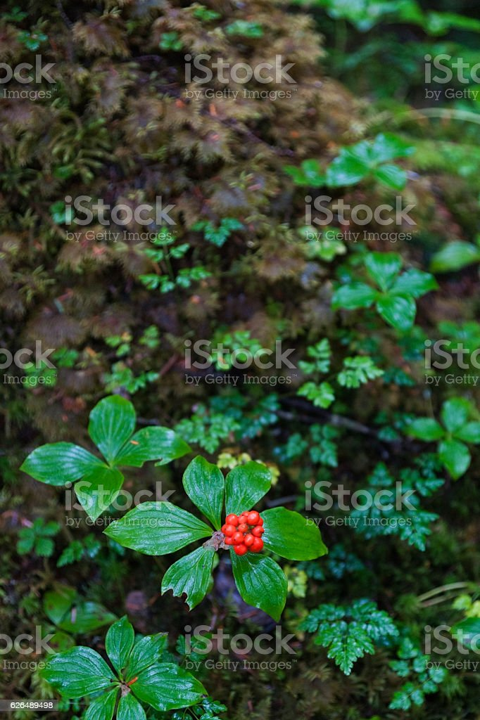 Plants in Tongass National Forest stock photo