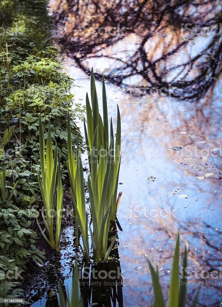 Plants in water stock photo