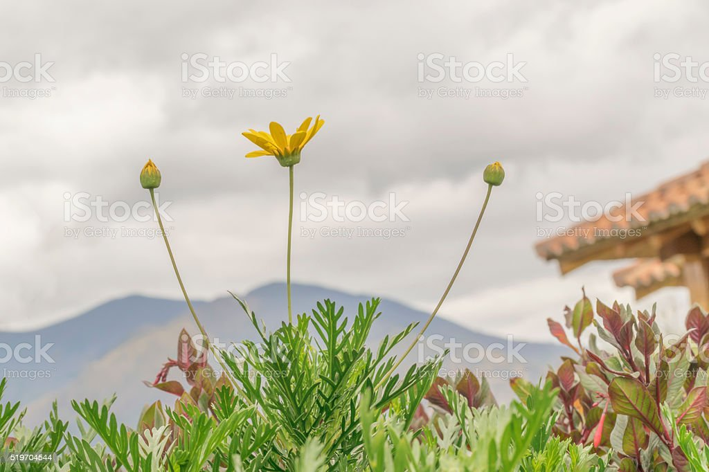 Plants Mountains and Clouds stock photo