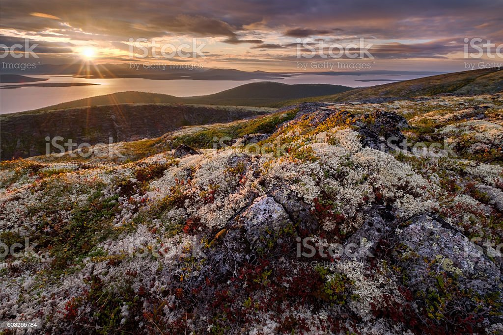 Plants of mountain tundra in autumn colors stock photo
