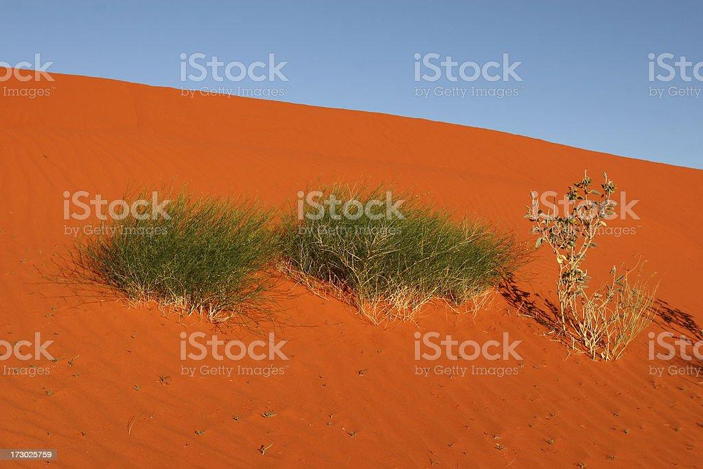 Plants on red Sanhills stock photo
