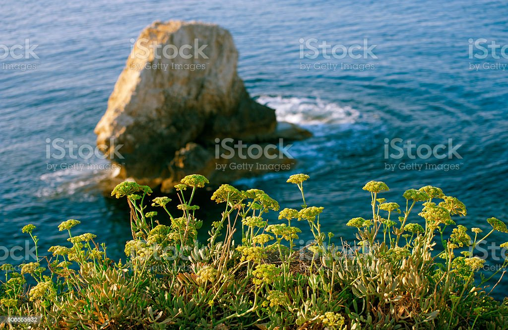 Plants on seacoast against the backdrop of cliffs stock photo