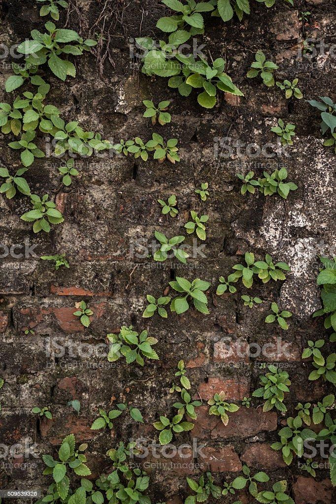 plants on wall stock photo