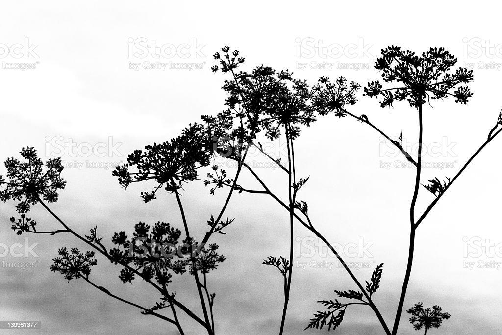 plants royalty-free stock photo