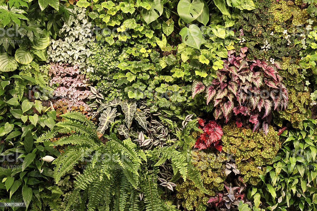 Plants stock photo