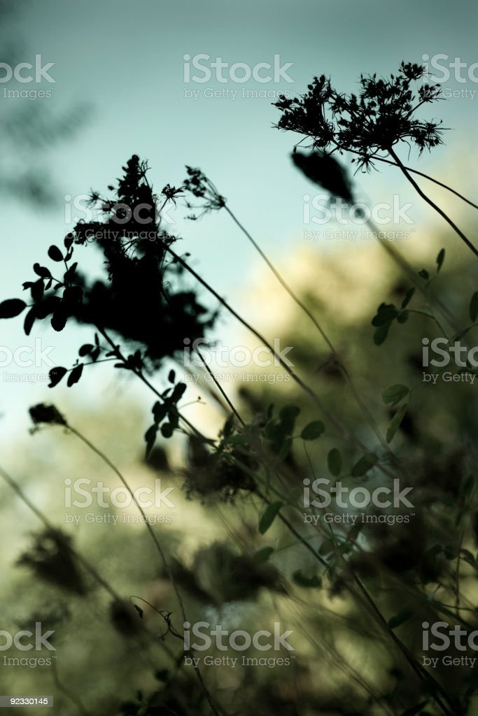 plants royalty-free stock photo