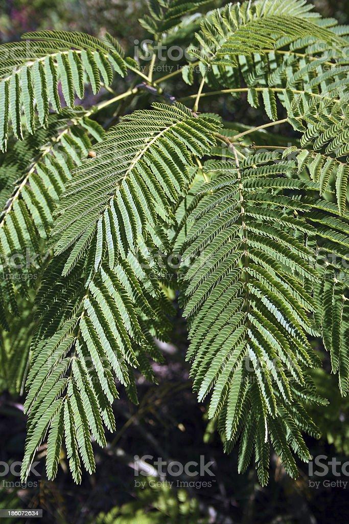 Plants production royalty-free stock photo