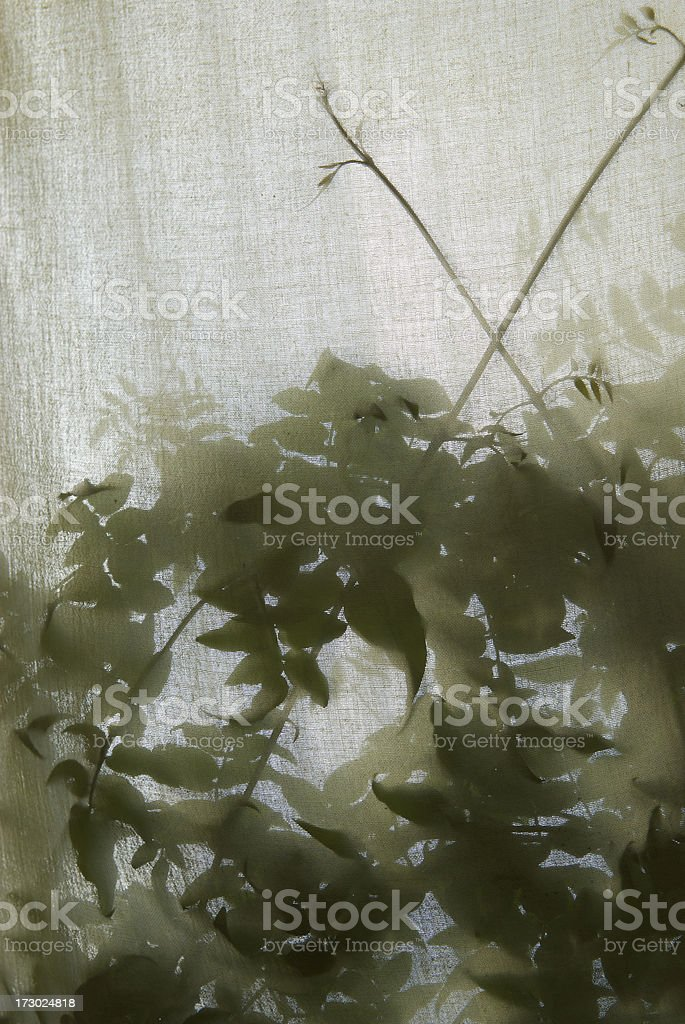 Plants Silhouette Behind a Scrim stock photo