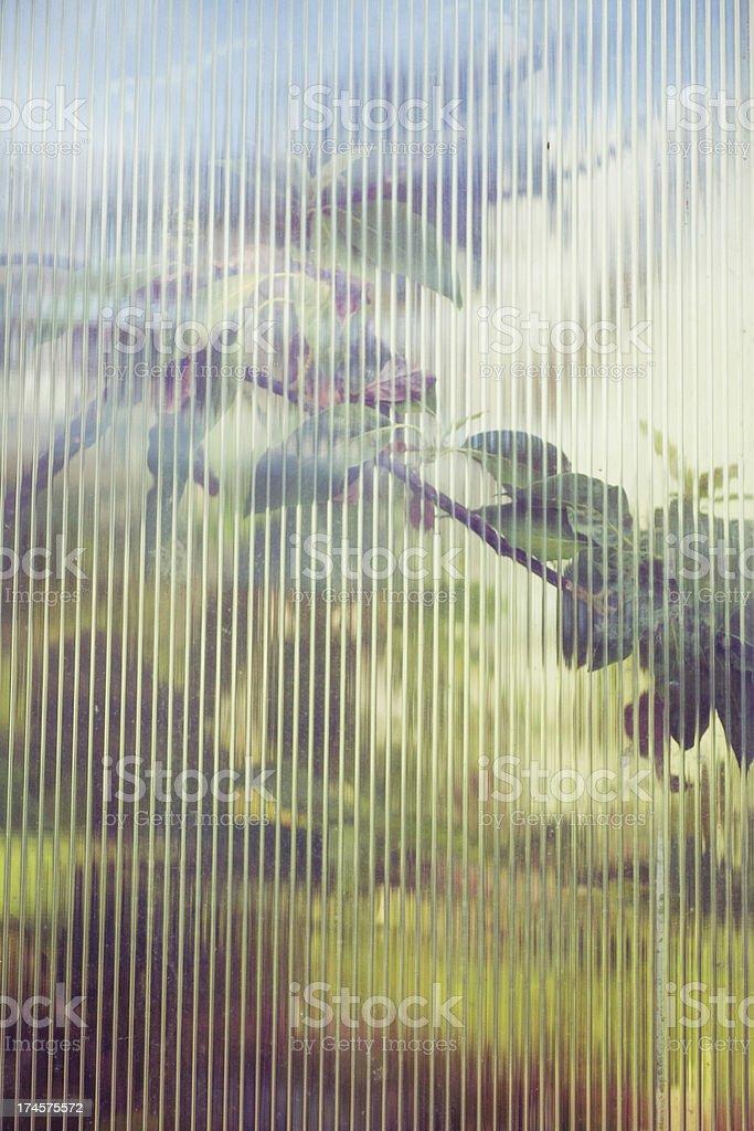 Plants through window royalty-free stock photo