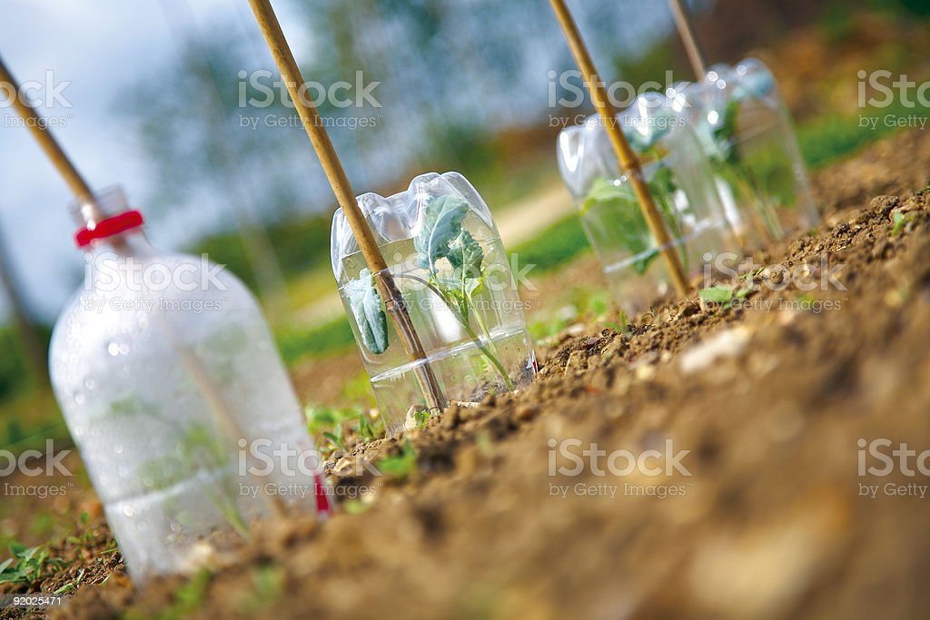 Plants under cloches stock photo