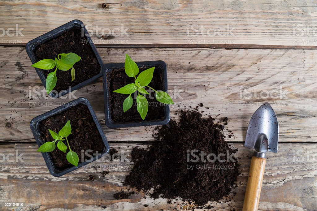 Plants with compost and trowel stock photo