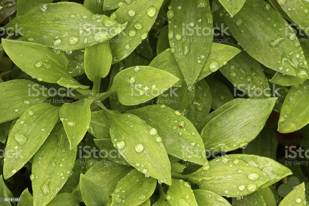 Plants with Morning Dew Drops. royalty-free stock photo