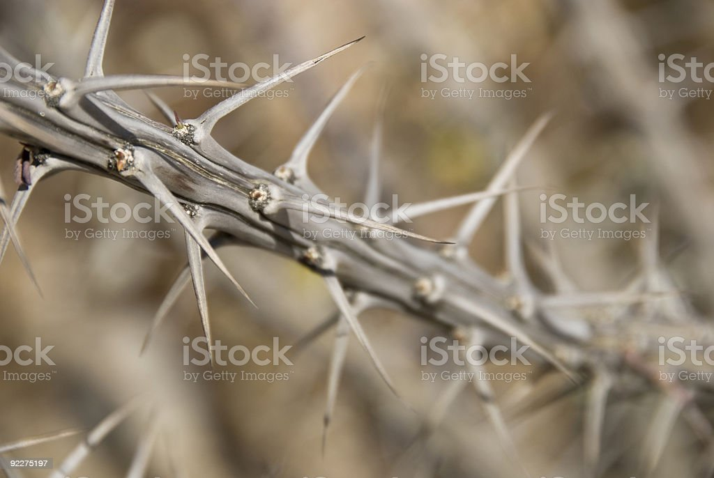 Plant-Thorn Branch2 stock photo
