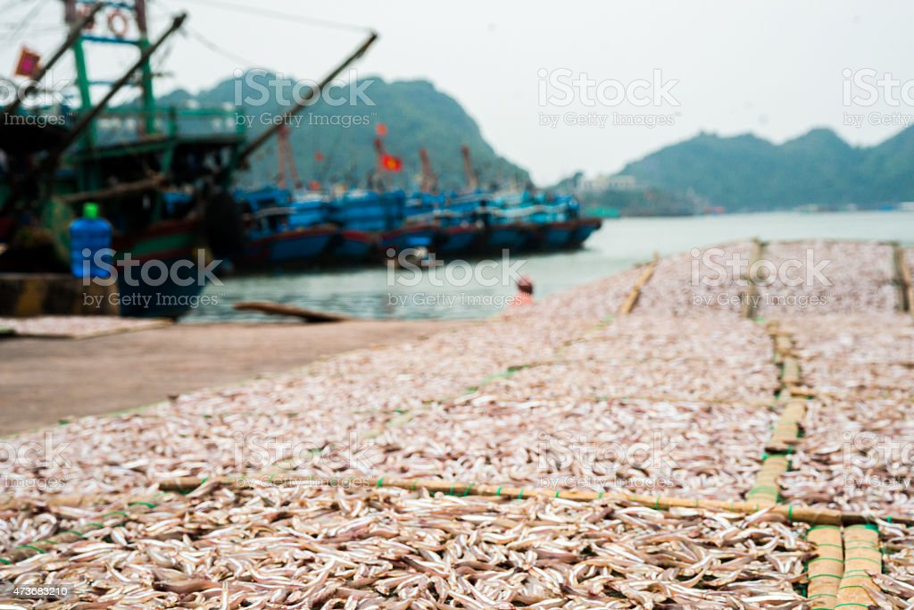 Planty of little anchovy fish drying on open air stock photo