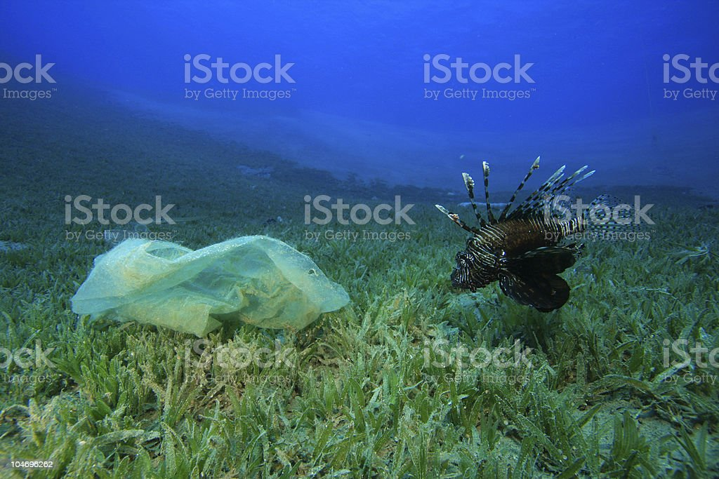 Plastic bag and Lionfish stock photo