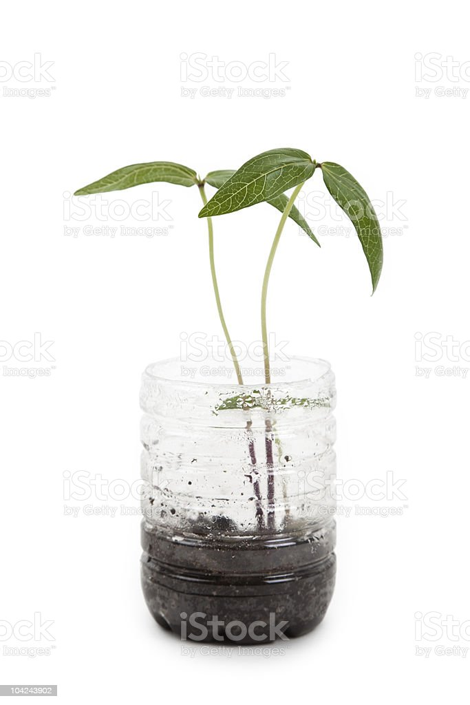 plastic bottle and Sprout royalty-free stock photo