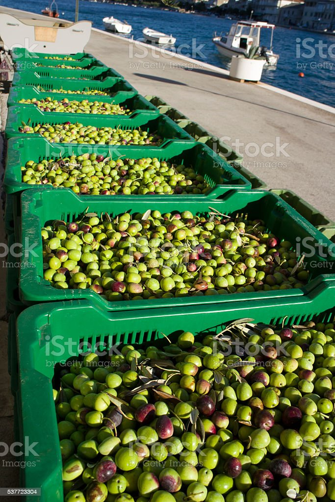 Plastic boxes with olives stock photo