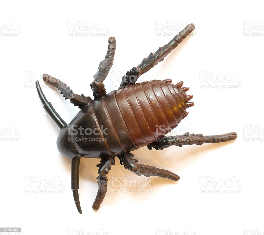 Plastic cockroach isolated stock photo