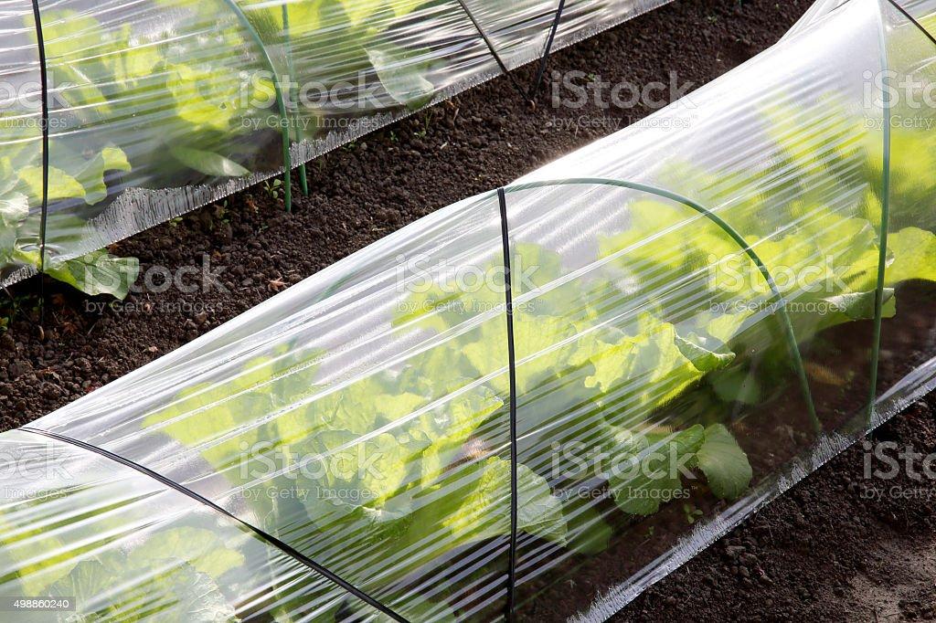 Plastic foil greenhouse stock photo