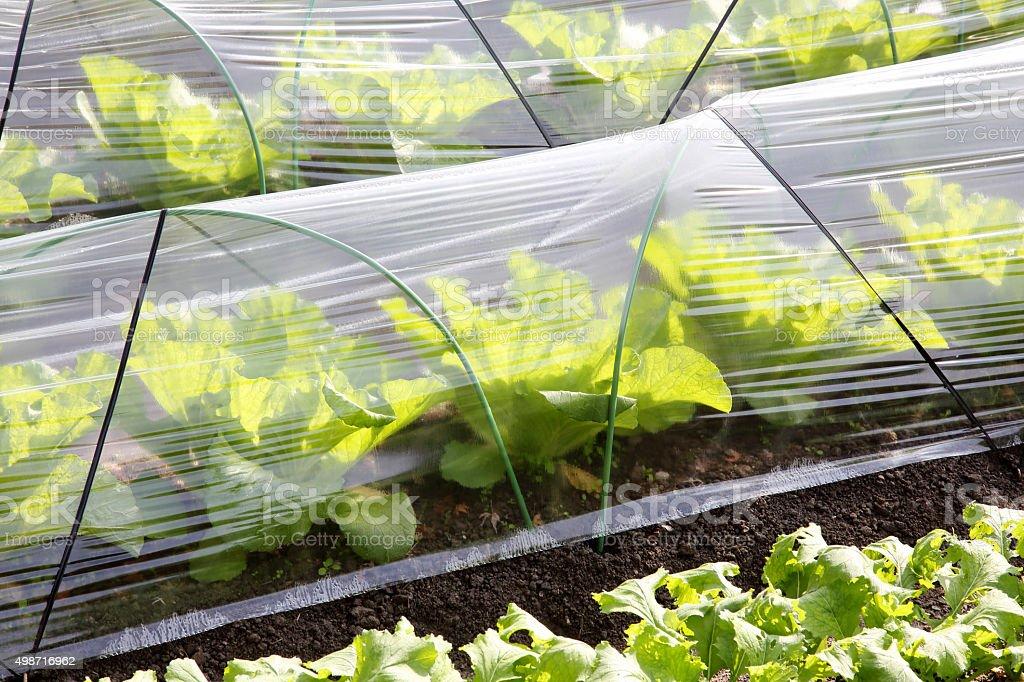 plastic greenhouse stock photo