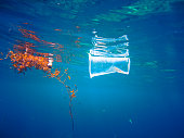 Plastic Ocean Pollution Floating Global Environmental Issue