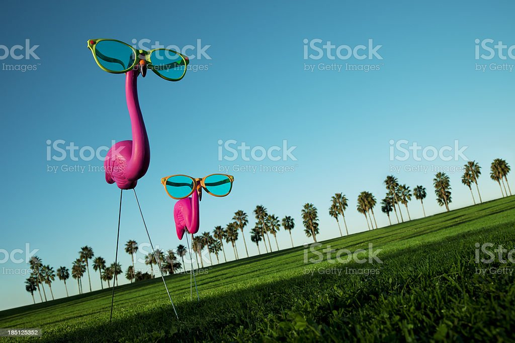 Plastic Pink Flamingos on a Green Lawn stock photo