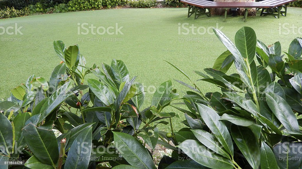 Plastic, synthetic, afrificial lawn grass, artificial turf, fake, laurel hedge stock photo