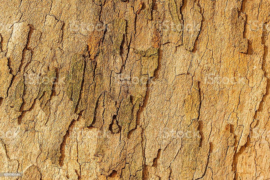 platan tree bark stock photo