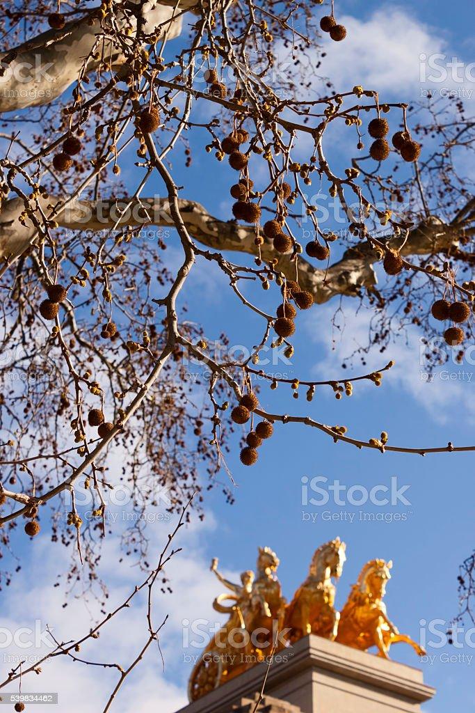 Platanus tree and Quadriga of Aurora stock photo