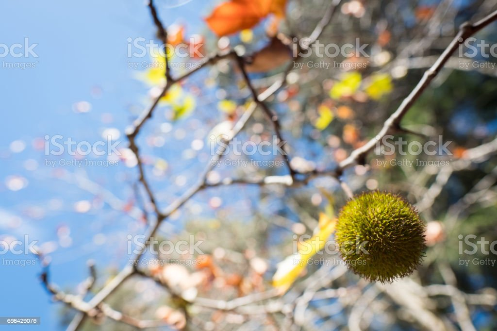 Tree, nature, South Africa, Environment, Green