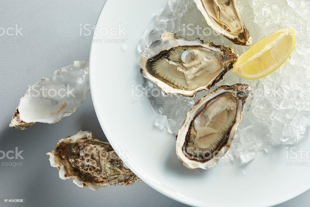 plate of opened oysters stock photo