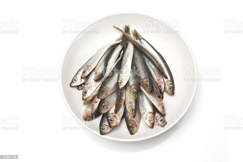 Plate of raw sprats isolated on white stock photo