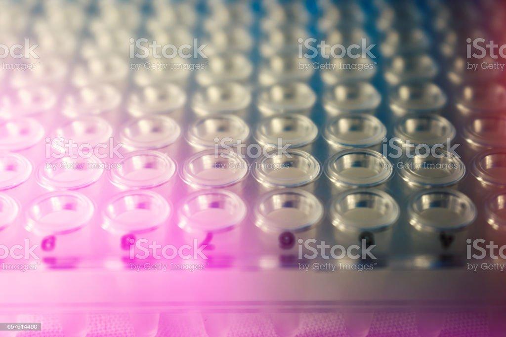 PCR plate stock photo