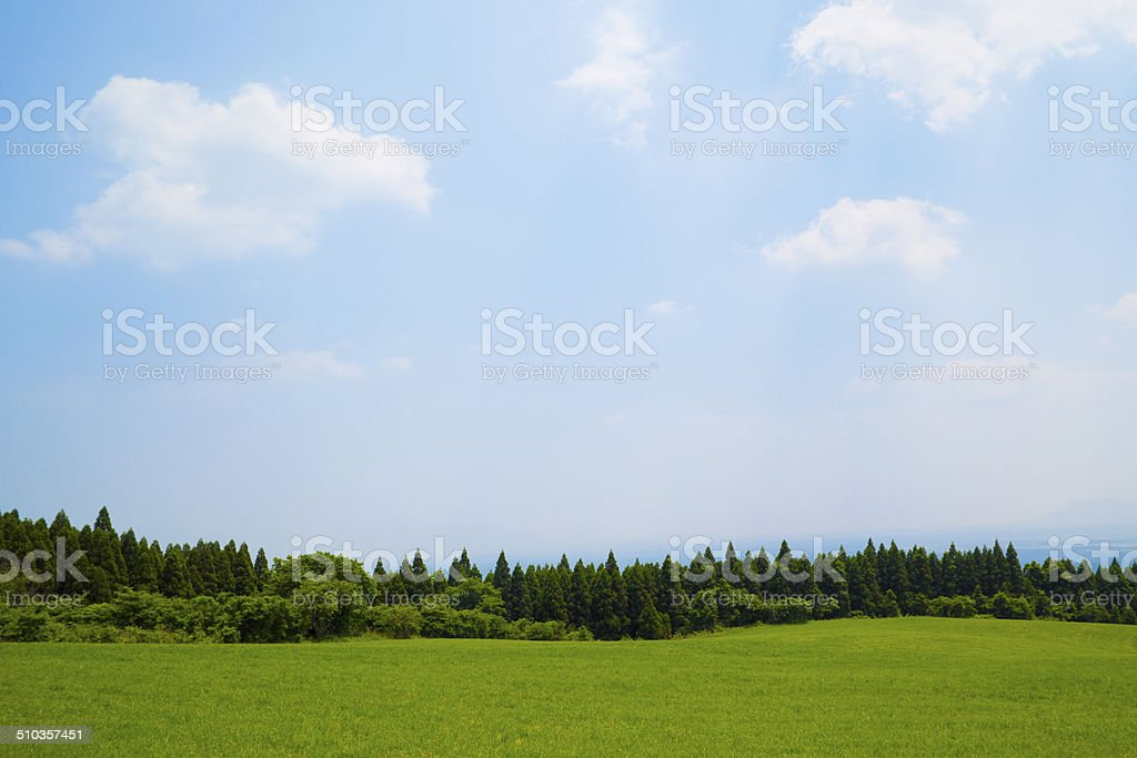 plateau early summer stock photo