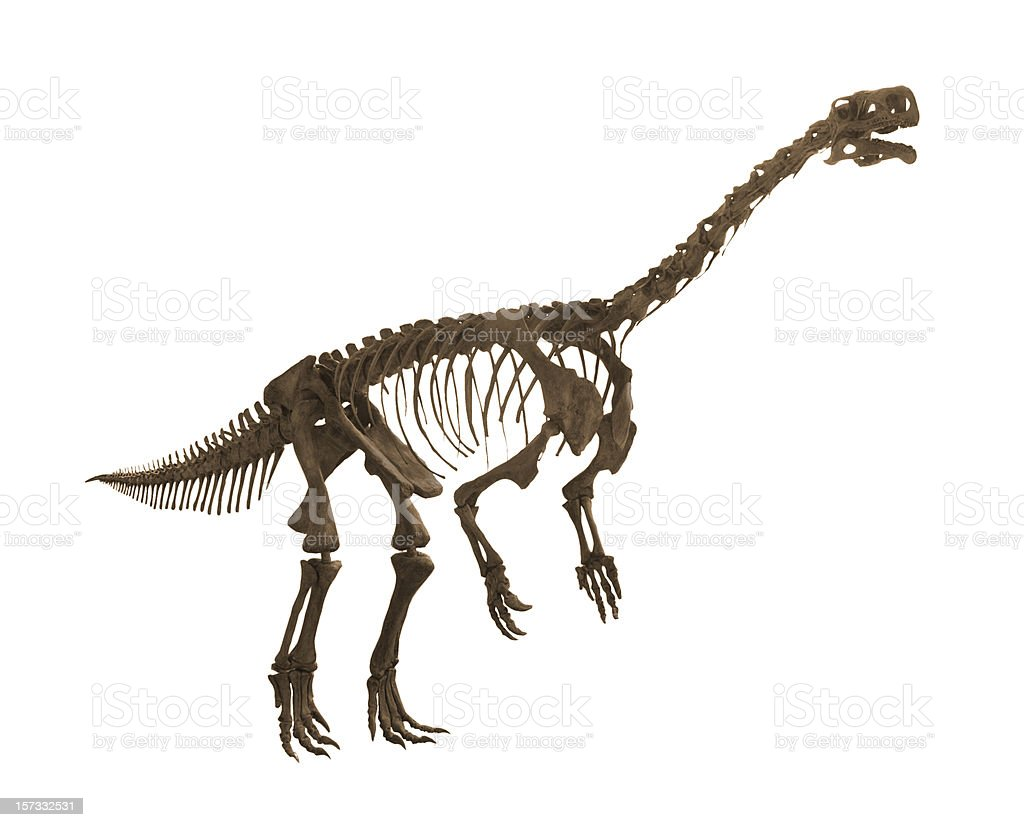 Plateosaurus royalty-free stock photo