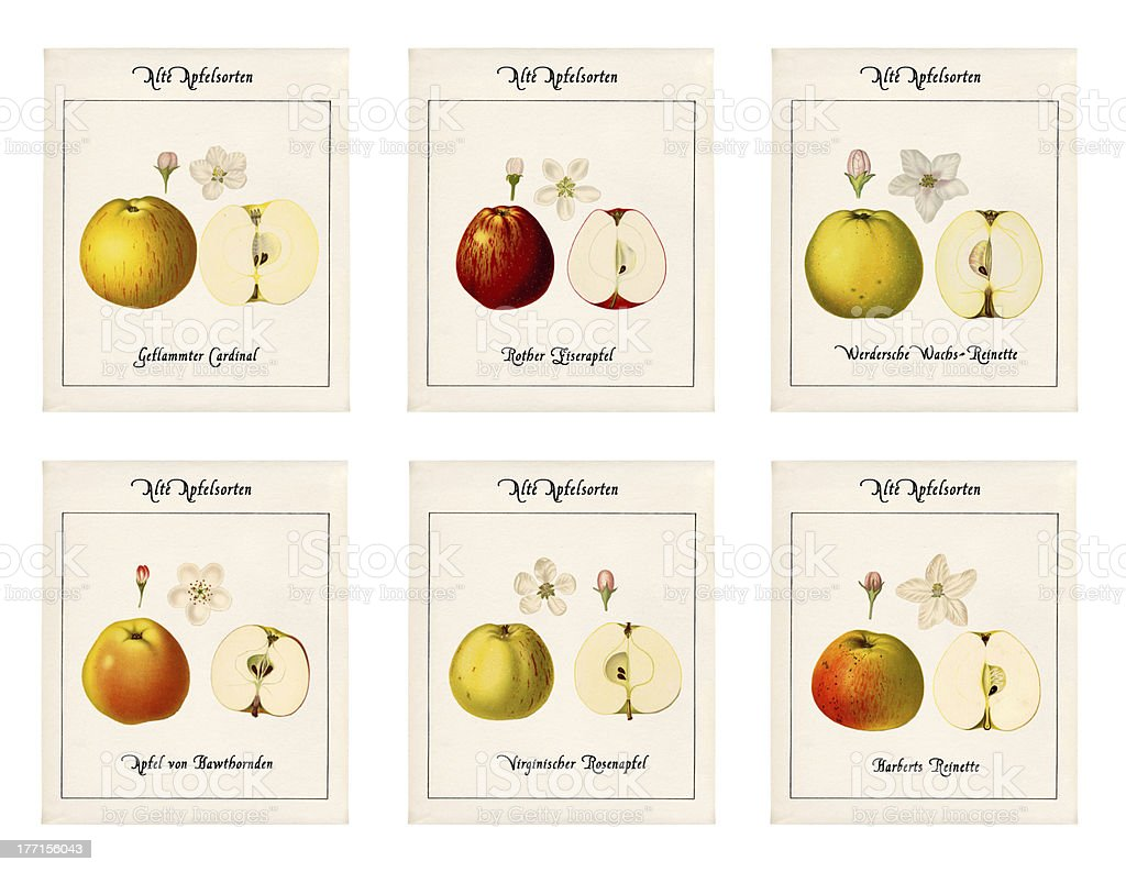 6 plates with illustrations of apple varieties royalty-free stock photo