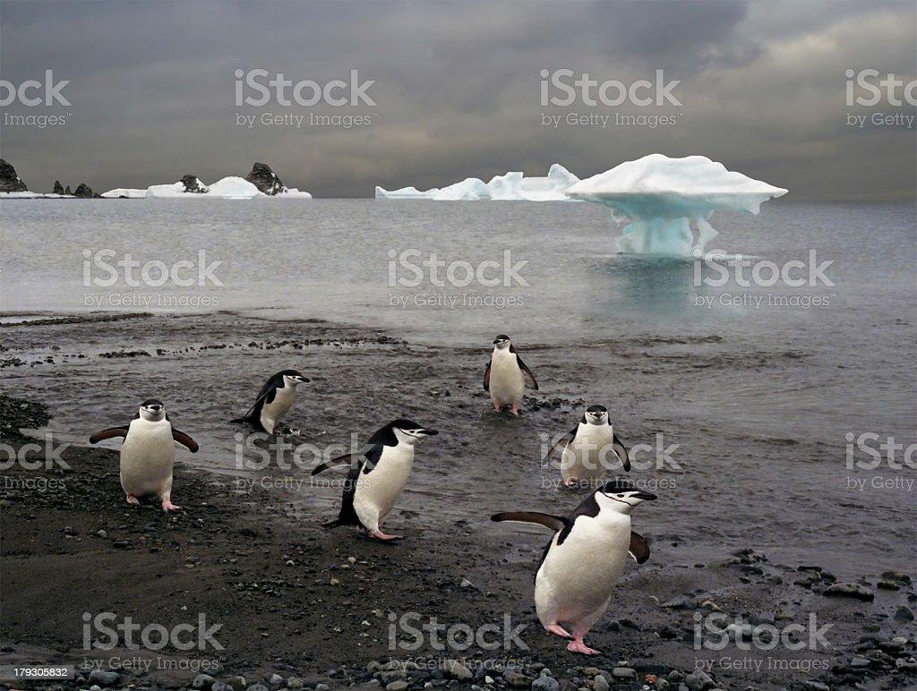 platoon of penguins stock photo