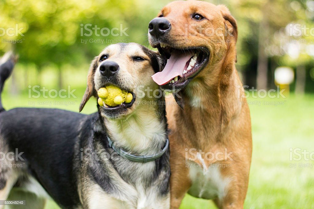 Play with us stock photo